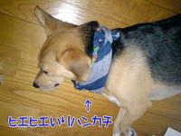 C_atui_1