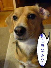 c_katamimi1