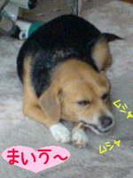 C_maiu