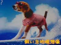 Lm_dog_1